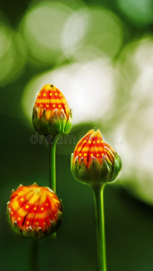 Fantasy buds stock images