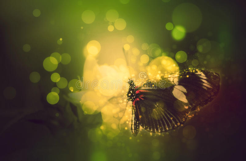 Fantasy butterfly on flower. Fantasy magic butterfly feeding on colorful plants and flowers royalty free stock image