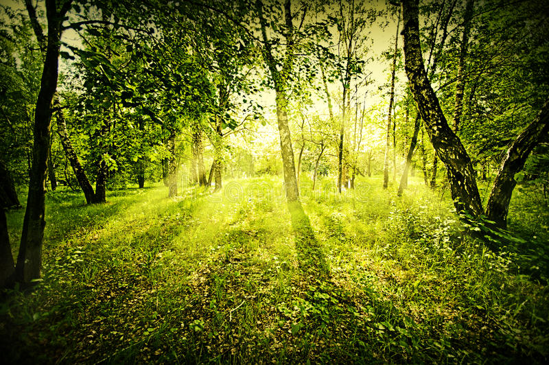 Download Fantasy deep forest stock photo. Image of grass, country - 26524772