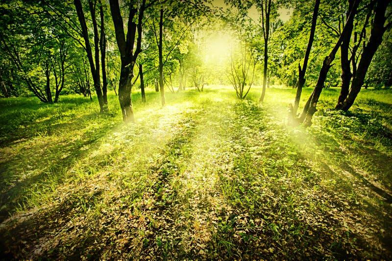 Download Fantasy deep forest stock image. Image of leaf, magic - 26524805