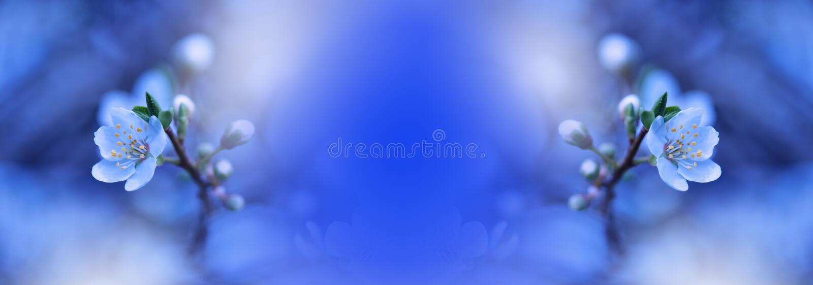 Spring nature blossom web banner or header.Abstract macro.Artistic Blue Background.Fantasy design.Colorful Wallpaper.Beautiful. stock photo
