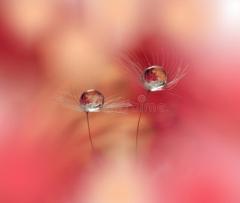 Abstract macro photo with water drops.Artistic Background for desktop. Magic Floral Art.Creative Wallpaper.Flower,pastel tones. stock photo