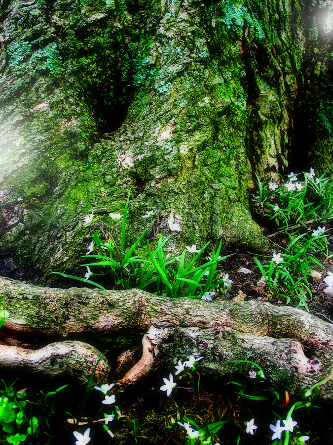 Free Fantasy Fairy Forest Stock Photos - 1768163
