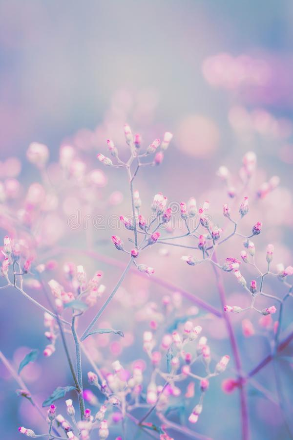 Fantasy flower, nature vintage pastels background.  stock photography