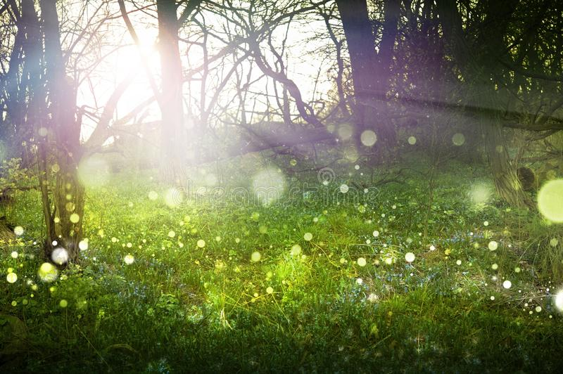 Fantasy Forest. Abstract Theme. Sunlight, Sun Rays, FLying Particles, Misty Fog and Forest.  Theme stock photography