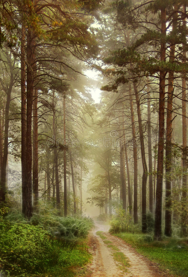 Download Fantasy forest stock photo. Image of forest, tree, country - 8982368