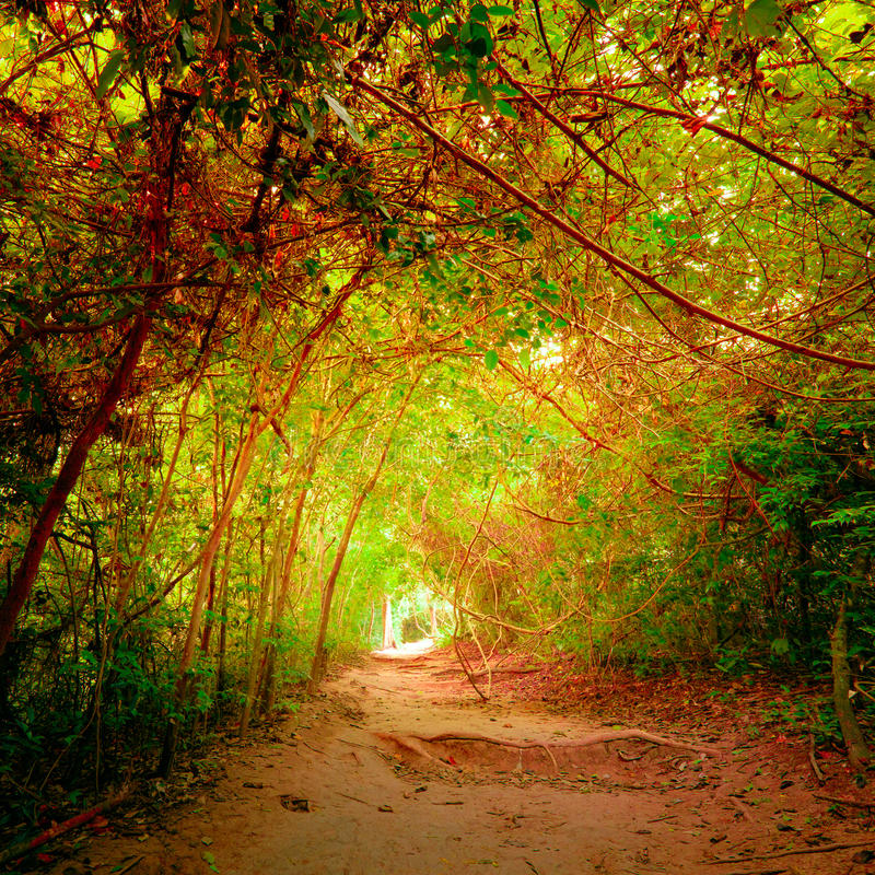 Fantasy forest in autumn colors with tunnel and path way stock photos