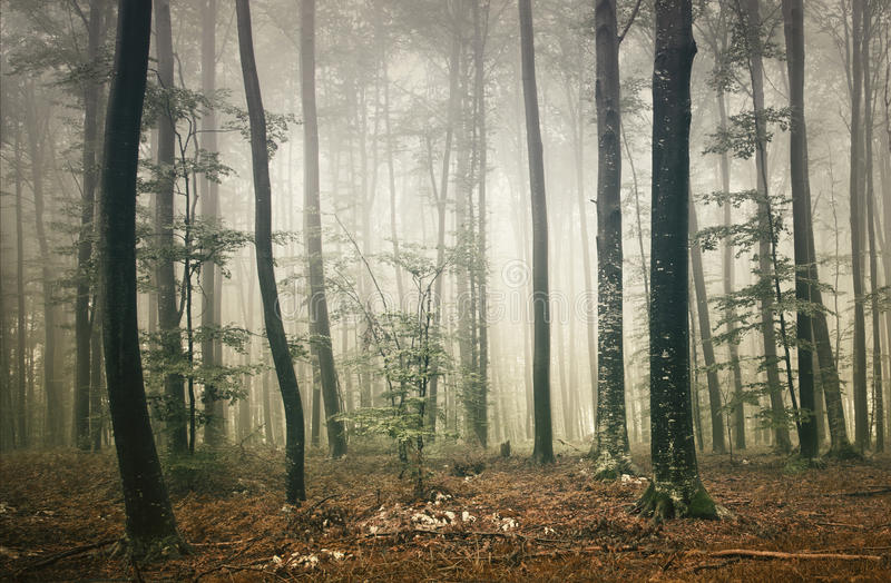 Download Fantasy forest stock photo. Image of dawn, fairytale - 34457496