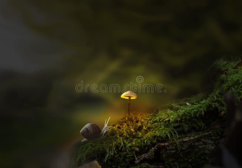 Fantasy forest with slug and glowing mushroom stock image