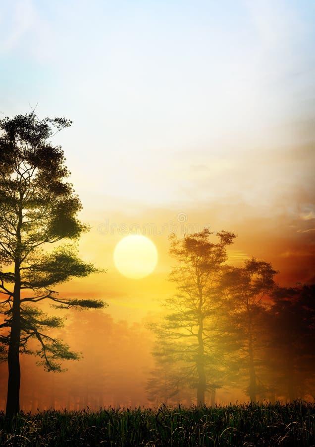 Fantasy Forest Sunrise royalty free illustration