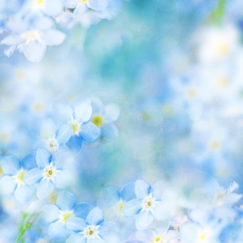 Fantasy Gentle Floral Background / Blue Flowers Defocused royalty free stock photography
