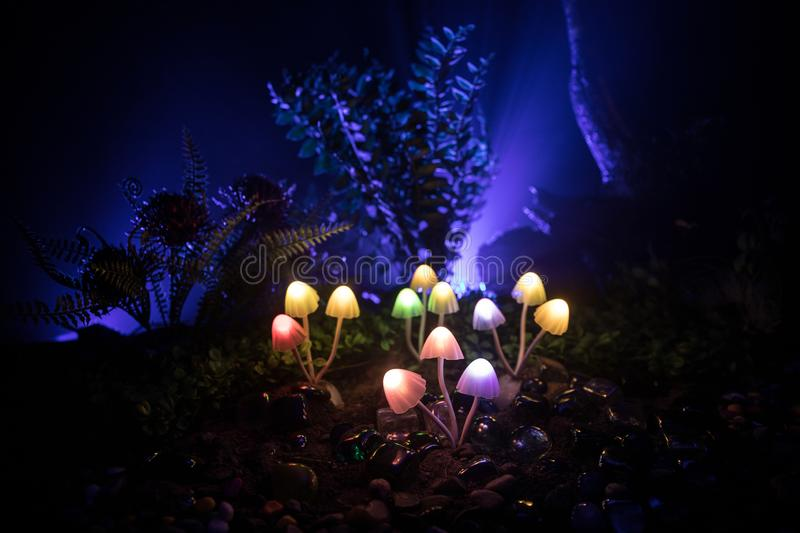 Fantasy glowing mushrooms in mystery dark forest close-up. Beautiful macro shot of magic mushroom or souls lost in avatar forest. Fairy lights on background royalty free stock photography