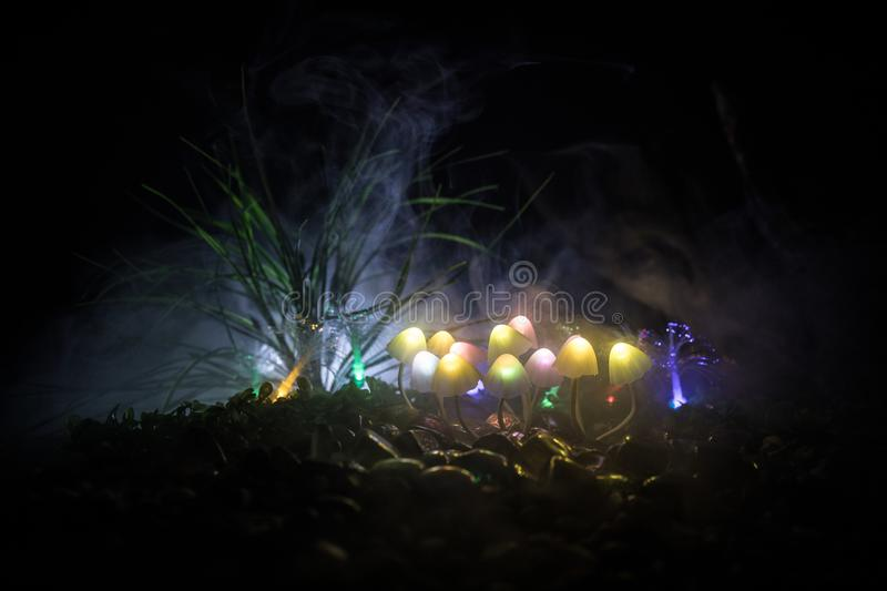 Fantasy glowing mushrooms in mystery dark forest close-up. Beautiful macro shot of magic mushroom or souls lost in avatar forest. Fairy lights on background royalty free stock image
