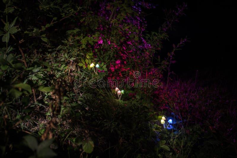 Fantasy glowing mushrooms in mystery dark forest close-up. Beautiful macro shot of magic mushroom or three souls lost in avatar stock photo