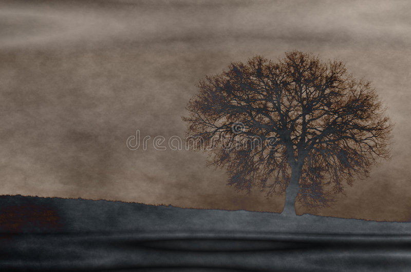 Fantasy grunge oak. Sepia grunge artwork with an oak. The photo used for this artwork is mine, shoot by me vector illustration