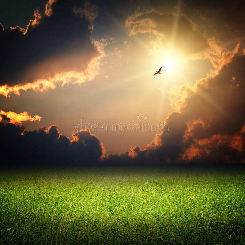 Fantasy landscape. Magic sunset and bird. On sky in sun light royalty free stock images