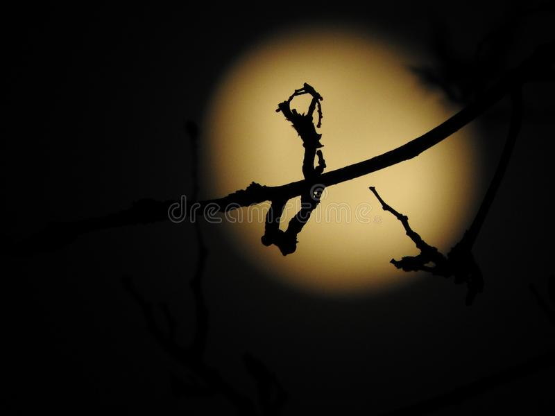 Fantasy mystic silhouette in front of moon. Fantasy magical mystic creation, silhouette, branch, in front of full moon stock images