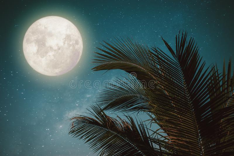 Fantasy palm tree tropical leaf with wonderful full moon. Beautiful fantasy palm tree tropical leaf with wonderful full moon - Milky Way star in night skies stock photography