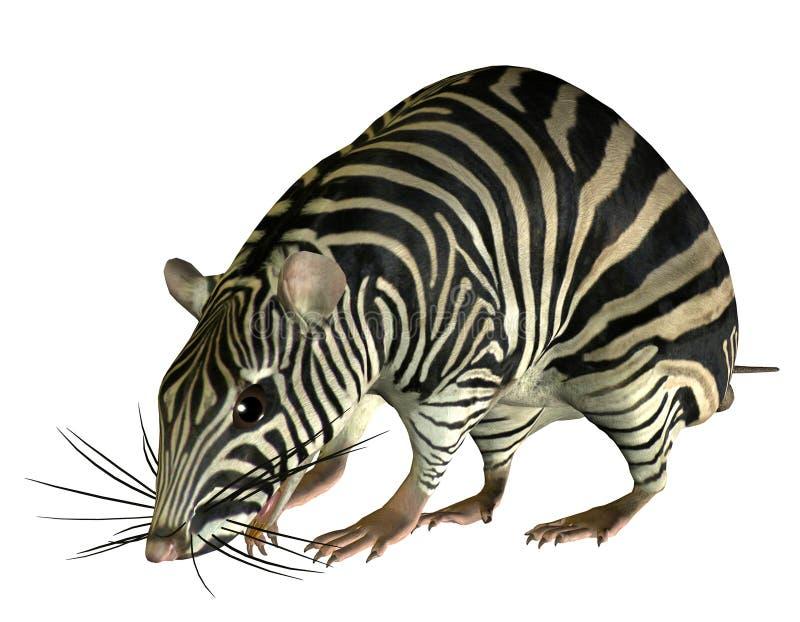 Fantasy rat in Zebra Look stock illustration