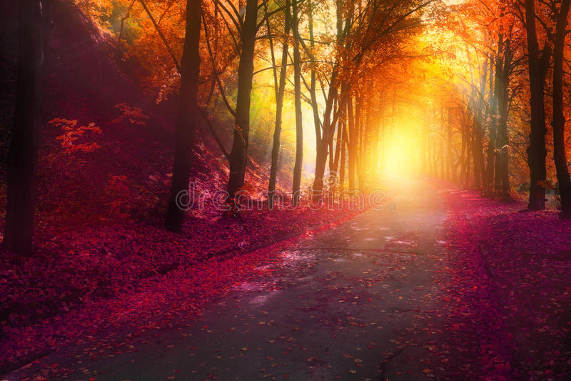 Fantasy scene in autumn park with sun rays stock photo