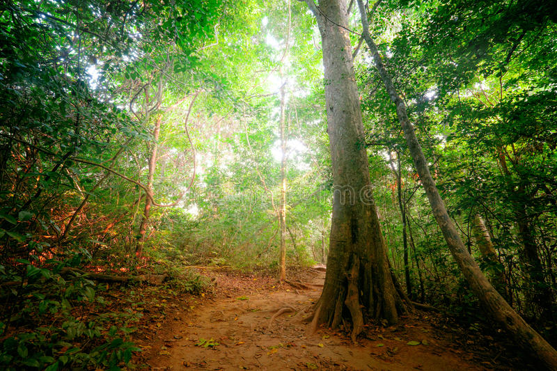 Fantasy tropical forest with road path way. Thailand nature stock photo