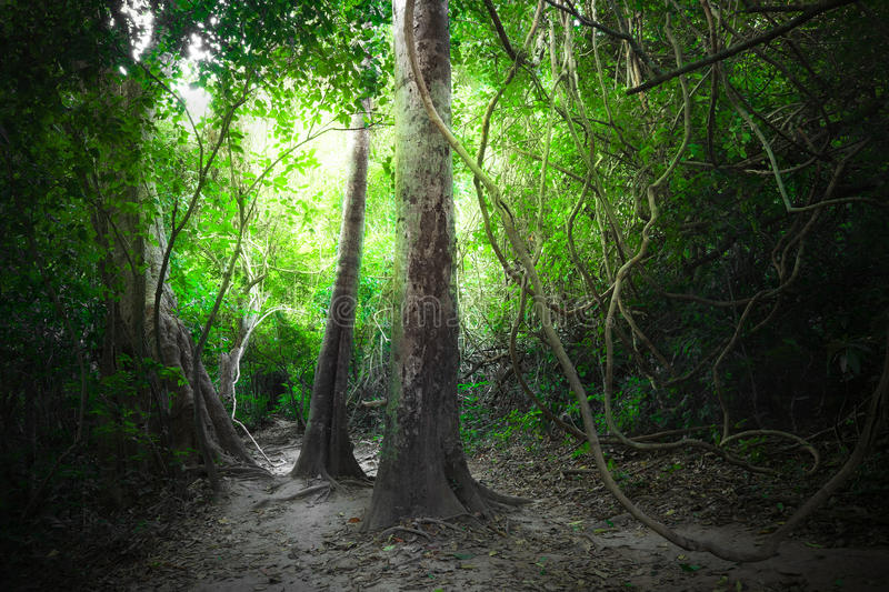 Fantasy tropical forest with road path way. Thailand nature royalty free stock photo