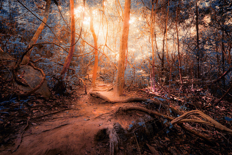 Fantasy tropical jungle forest in surreal colors. Concept landsc. Ape for mysterious background stock image