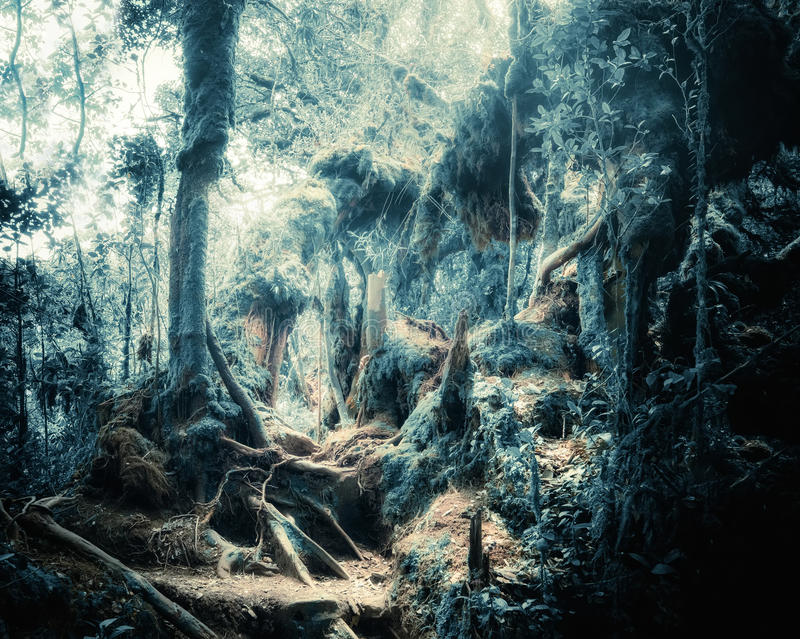 Fantasy tropical jungle forest in surreal colors. Concept landscape. Surreal colors of fantasy landscape at mystical tropical mossy forest with amazing jungle royalty free stock photo