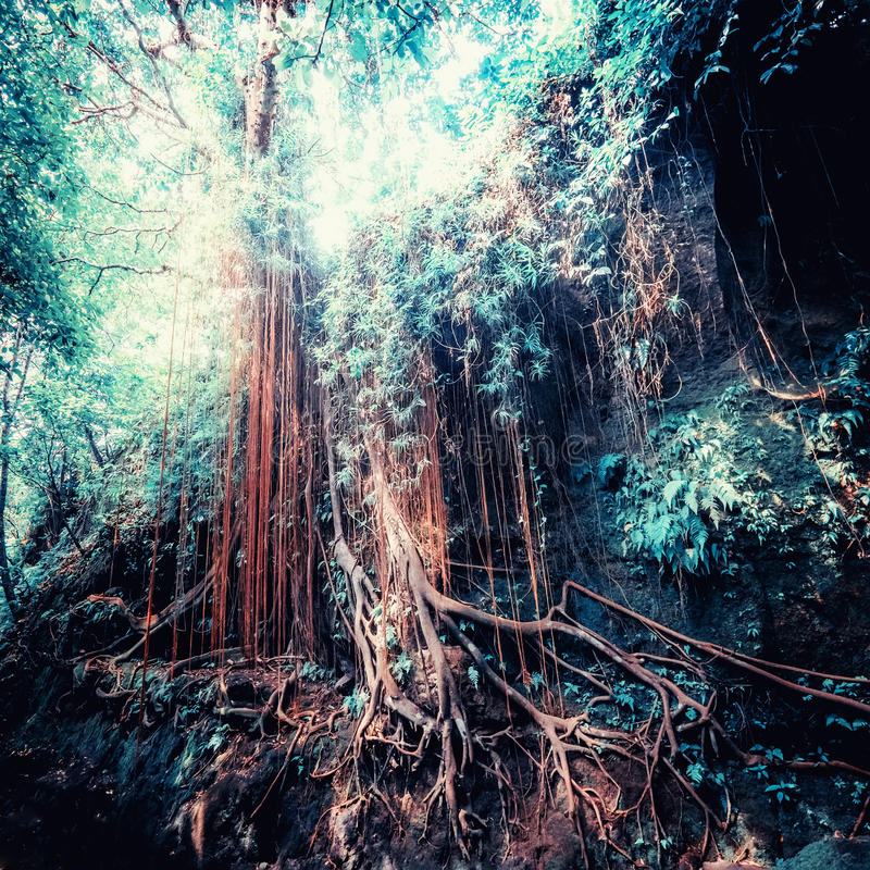 Fantasy tropical jungle forest in surreal colors. Concept landscape. Surreal colors of fantasy landscape at mystical tropical mossy forest with amazing jungle stock image