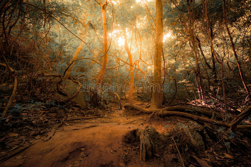 Fantasy tropical jungle forest in surreal colors. Concept landscape stock photos