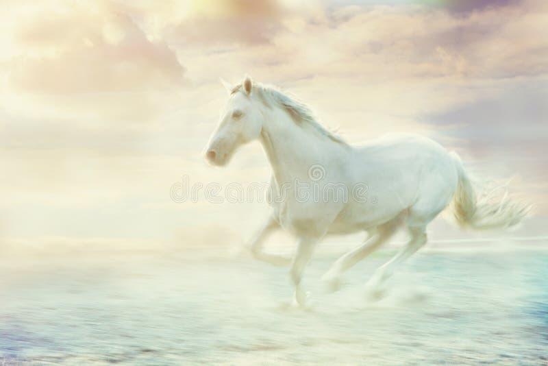 Fantasy white horse royalty free stock image