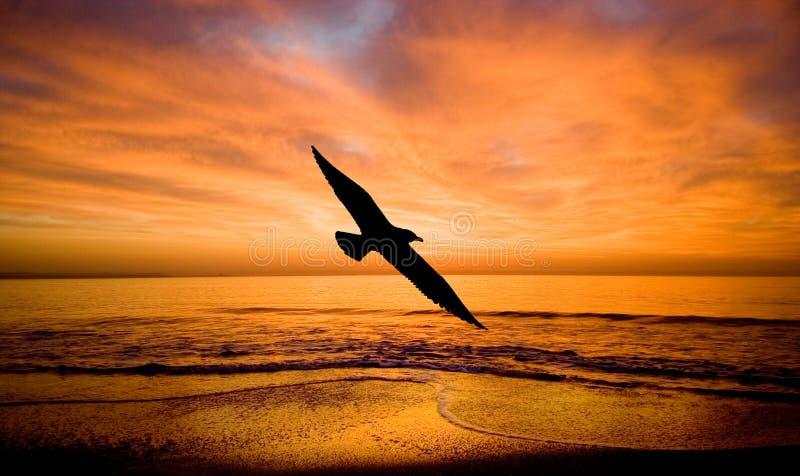 Fantazia-Flight to a bird. stock photos