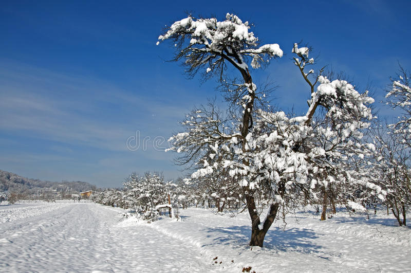 Far cottage and tree covered by snow royalty free stock images