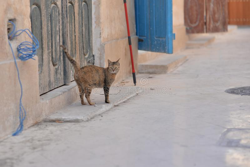 Far shot of an alley cat and colourful weathered doors at Wakrah souq. Taken at the end of a winter afternoon, Al Wakrah, Qatar royalty free stock photos