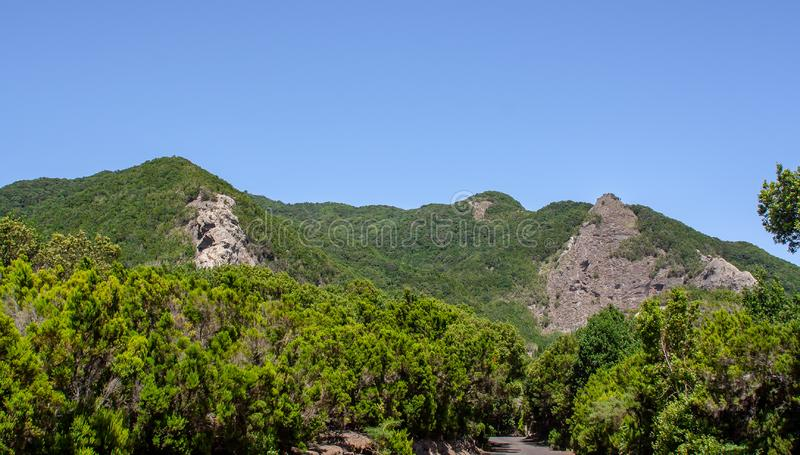 Far view to a forest with rocks. A far view to a forest with rocks stock images