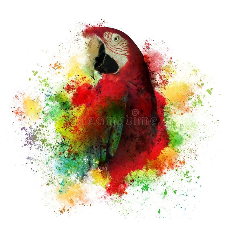 Farb Splatters Maccaw papuga na bielu fotografia royalty free