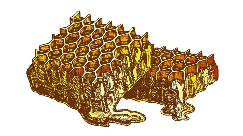 Farbbienenwaben-Stück mit frischem organischem Honey Vector vektor abbildung