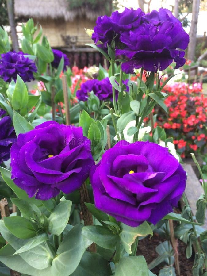 Farbe der Blume stockfotografie