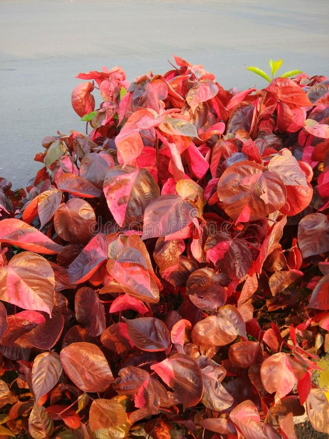 Farbe der Natur stockfoto