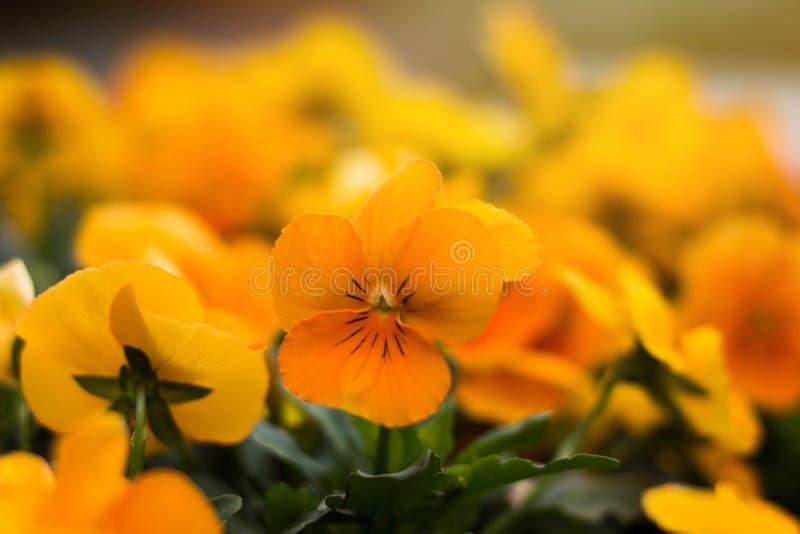 Farbe des Frühlinges lizenzfreies stockfoto