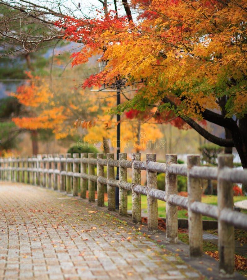 Farbe des japanischen Ahornbaums lizenzfreie stockfotografie