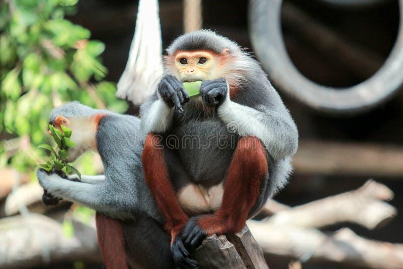 Farbe des Makakens fünf lizenzfreie stockfotos