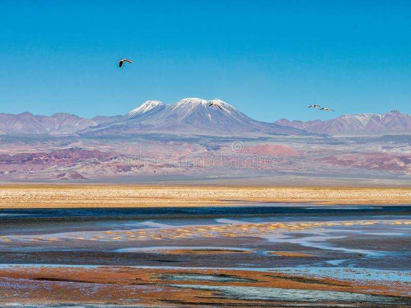 Farben der Atacama-Wüste stockbild