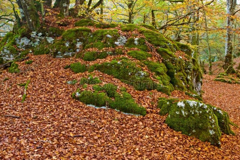 Farben in der Herbstjahreszeit stockfoto
