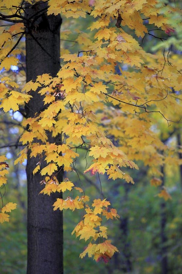 Farben der Herbstsaison in Mazovia-Region in Polen stockbild