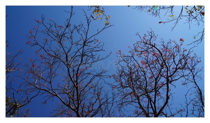 Farben der Natur lizenzfreie stockfotografie