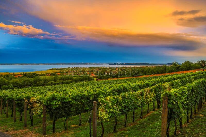 Farben des Balaton-Sommers stockfotos