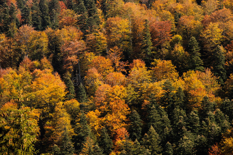 Farben des Herbstes stockfotografie