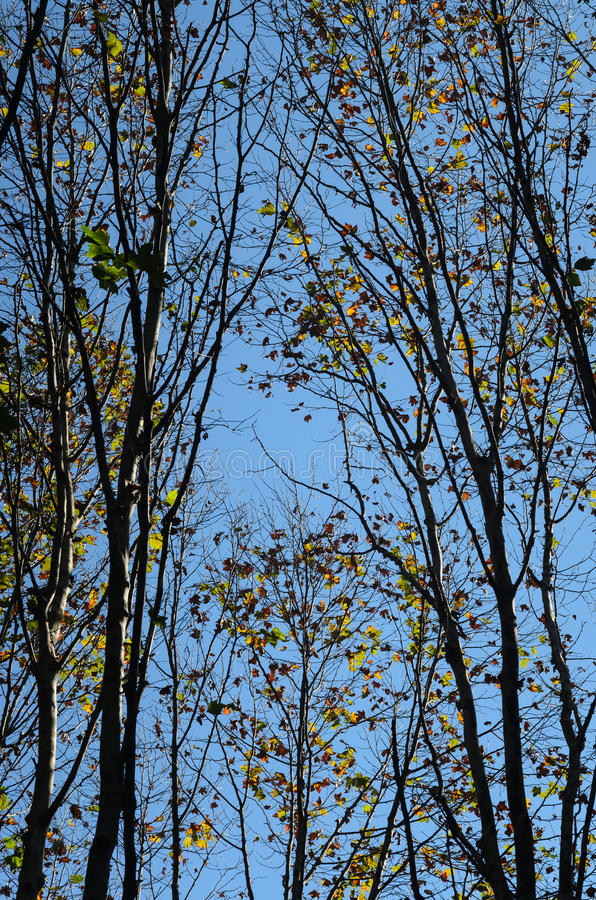 Farben des Herbstes stockbild