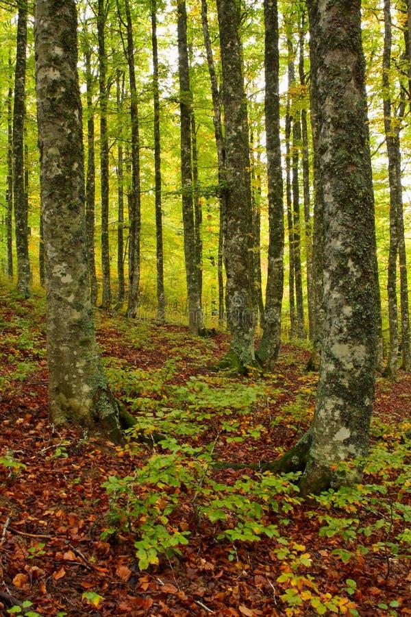 Farben im Herbst lizenzfreies stockfoto